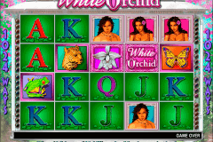 white orchid igt slot machine